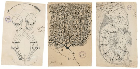Three drawings of different neural structures on yellowed paper