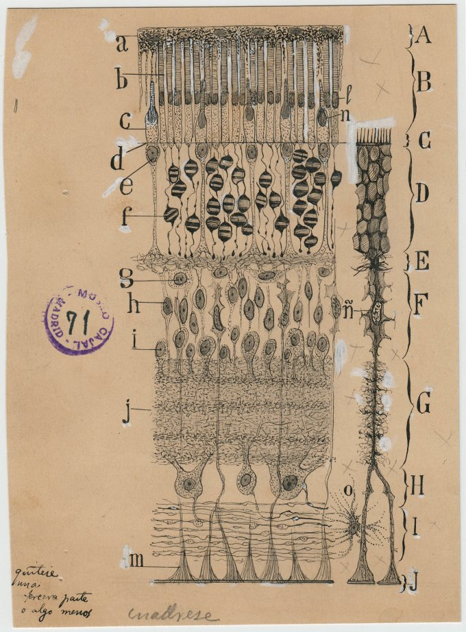 Drawing of neurons of yellowed paper